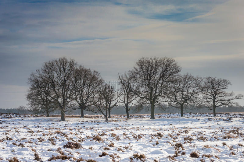 Deelerwoud im Winter lizenzfreie stockfotografie