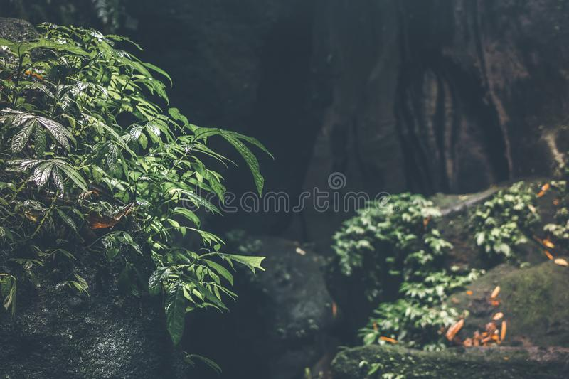 Deep in the asian rainforest. Tropical nature. stock photos