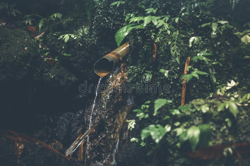 Deep in the asian rainforest. Tropical nature. royalty free stock image