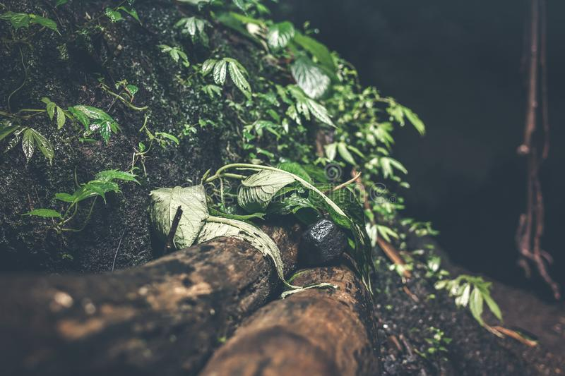 Deep in the asian rainforest. Tropical nature. stock image