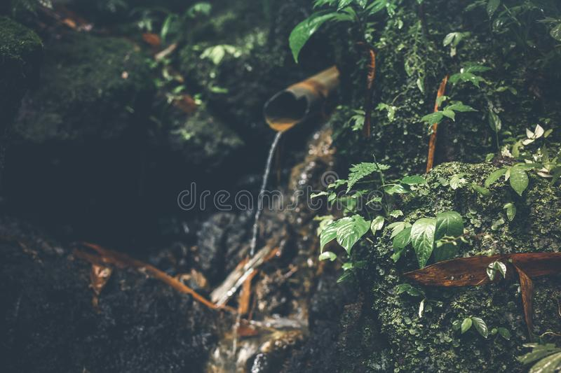 Deep in the asian rainforest. Tropical nature. royalty free stock images