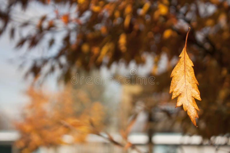 Download Deep Autmn On Country Side. Stock Photo - Image: 22610210