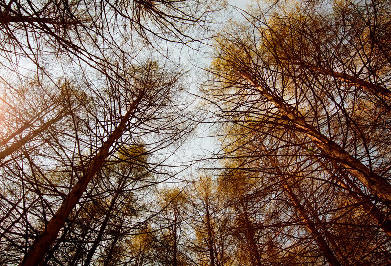 Deep autumn forest. royalty free stock images