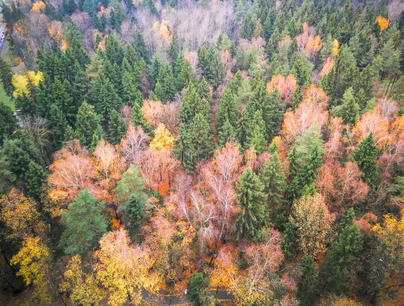 Autumn forest view from the top. Deep autumn forest with fallen yellow leaves.The view from the top. The picture creates atmospheric, autumn, morning background stock image
