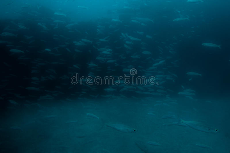 Deep blue. Underwater view, fish on stones and deep blue water background stock photography