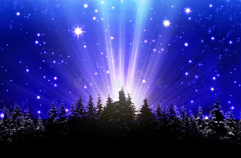 Deep blue night sky filled with stars. Fir trees and star sky.Deep blue night sky filled with stars royalty free stock photo