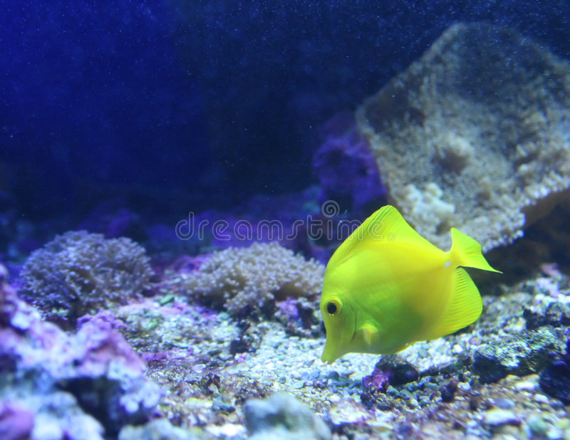 Deep blue sea stock images
