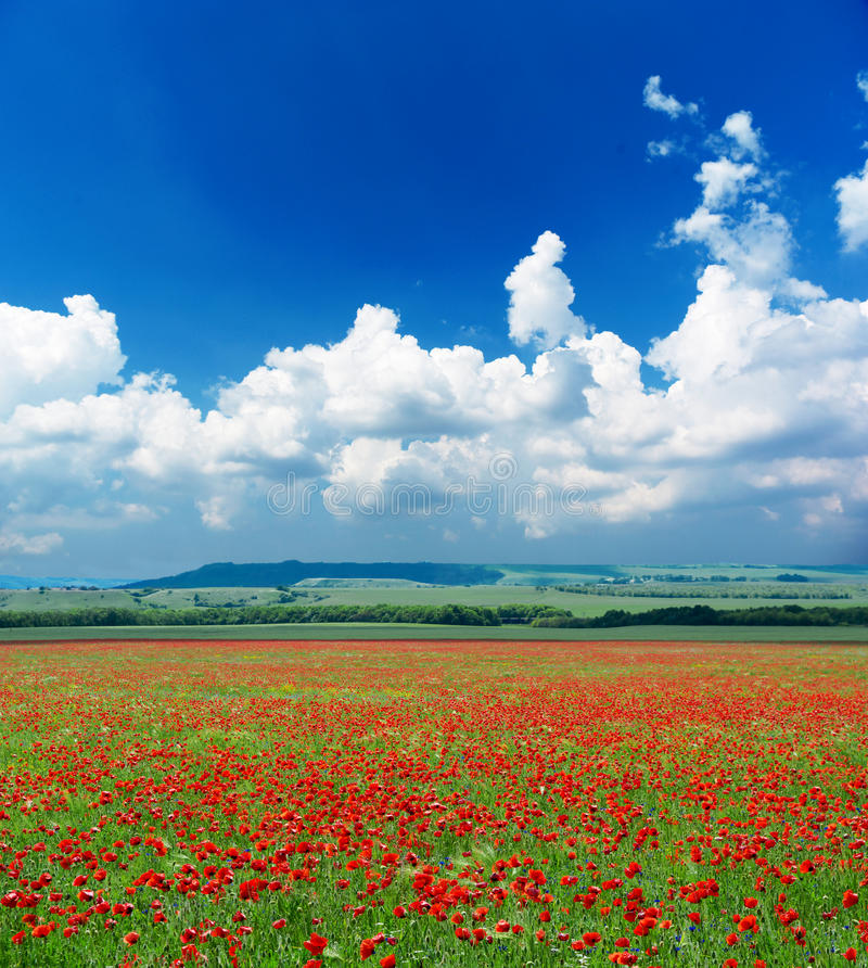 Free Deep Blue Sky And Poppy Meadow Royalty Free Stock Image - 13737316
