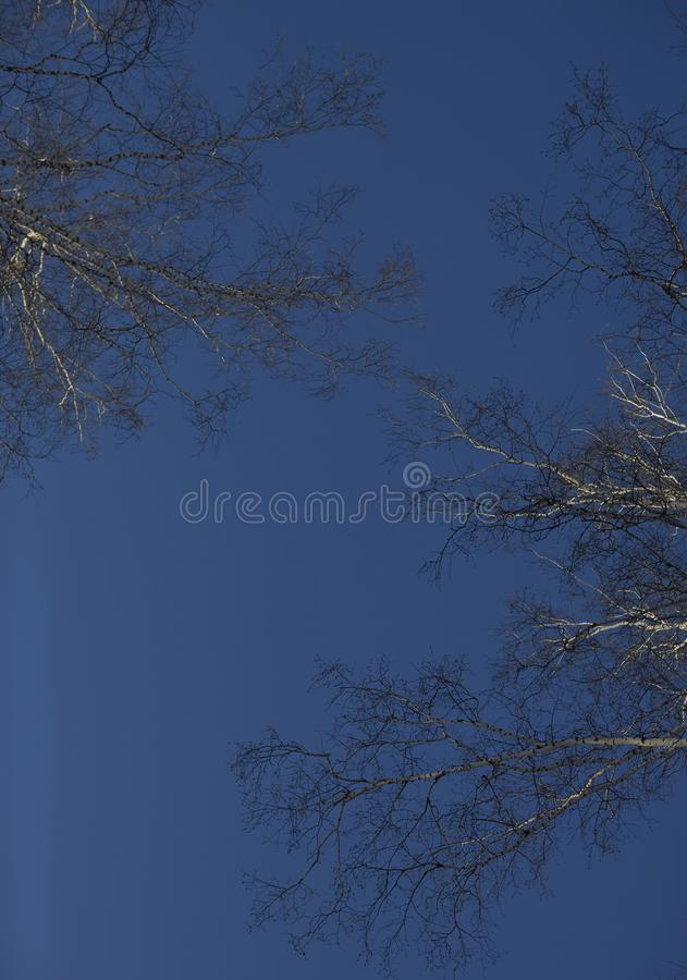 Free Deep Blue Winter Sky With Birch Branches. Royalty Free Stock Photos - 108225148