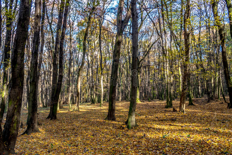 Deep in colorful autumn forest in November, Bratislava, Slovakia royalty free stock photo