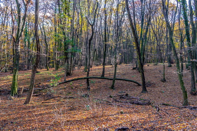 Deep in colorful autumn forest in November, Bratislava, Slovakia stock photos