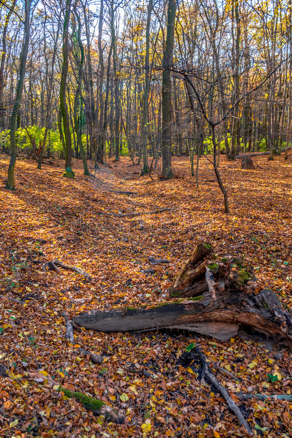 Deep in colorful autumn forest in November, Bratislava, Slovakia stock images