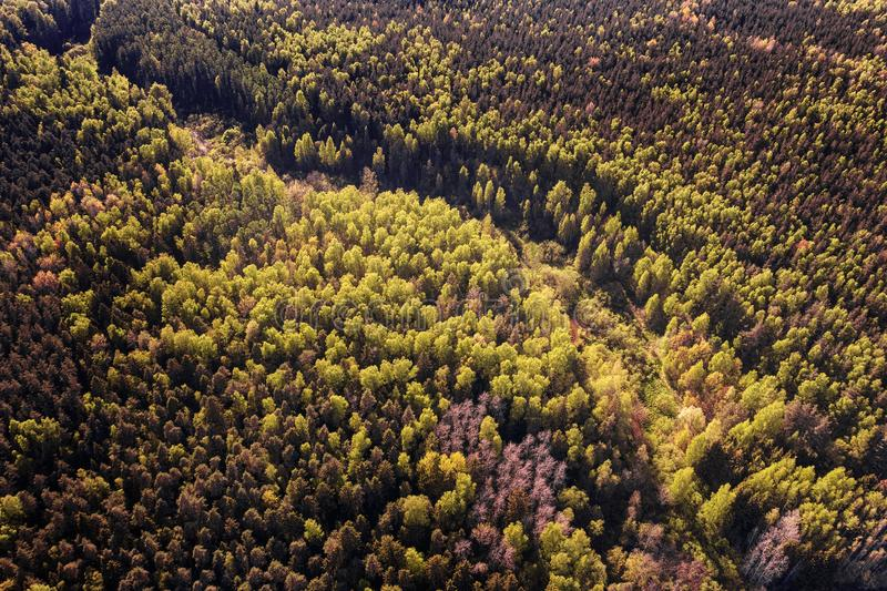 Deep dark forest aerial view stock photo