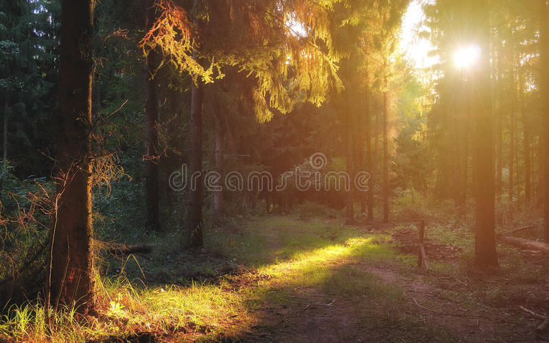 Deep and dark forest road with sunlight in early autumn stock image