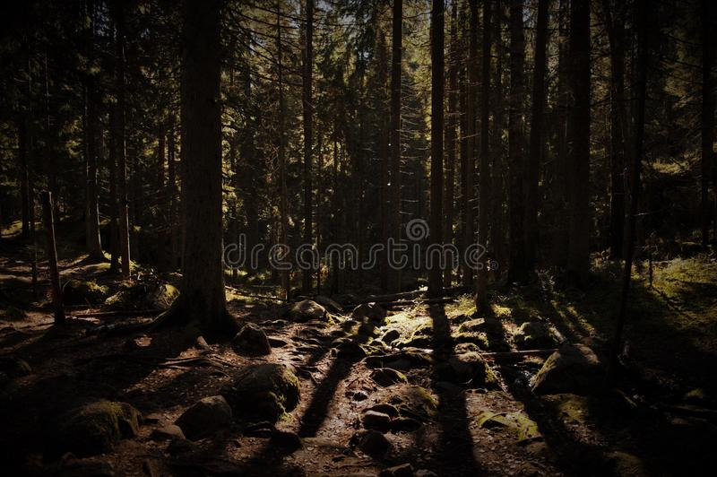 Deep Dark Forest with sun shining through stock images