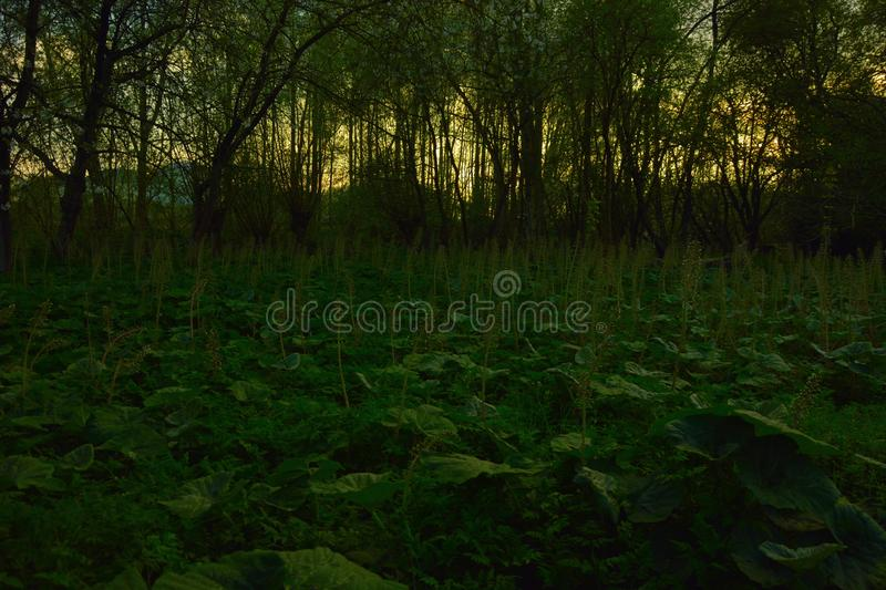 Deep in the dark and spooky forrest stock photos