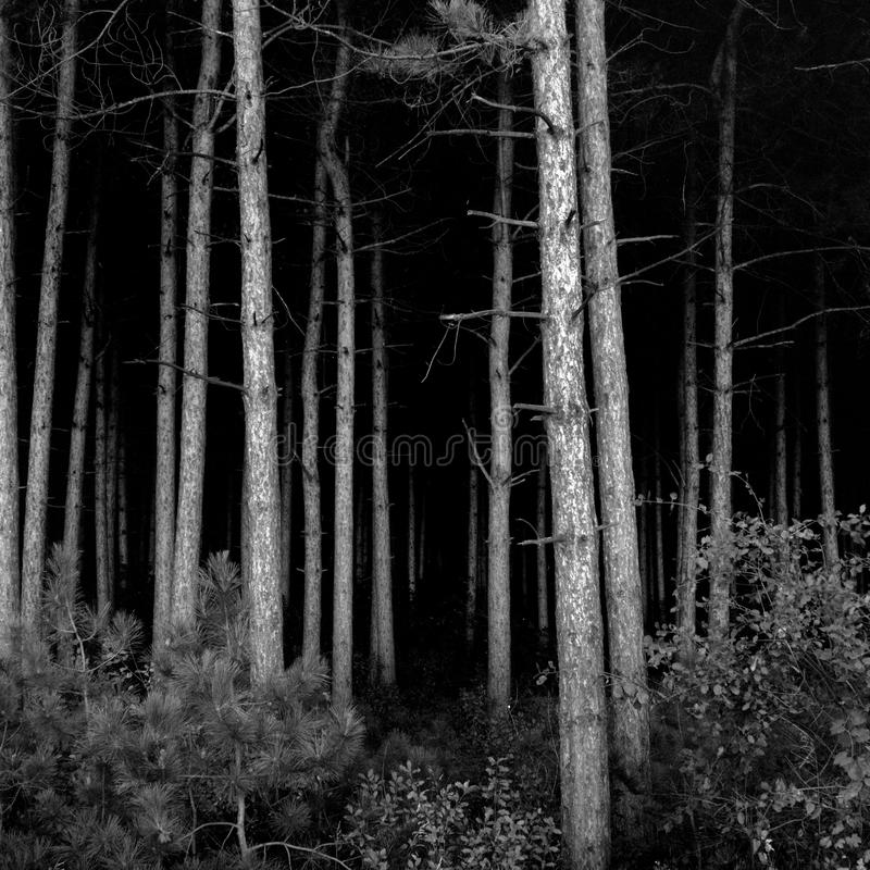 Download Deep Dark Woods stock photo. Image of depression, trees - 21193956