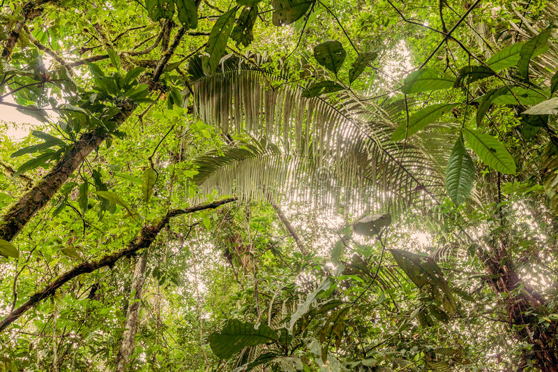 Deep In The Ecuadorian Dense Jungle royalty free stock images