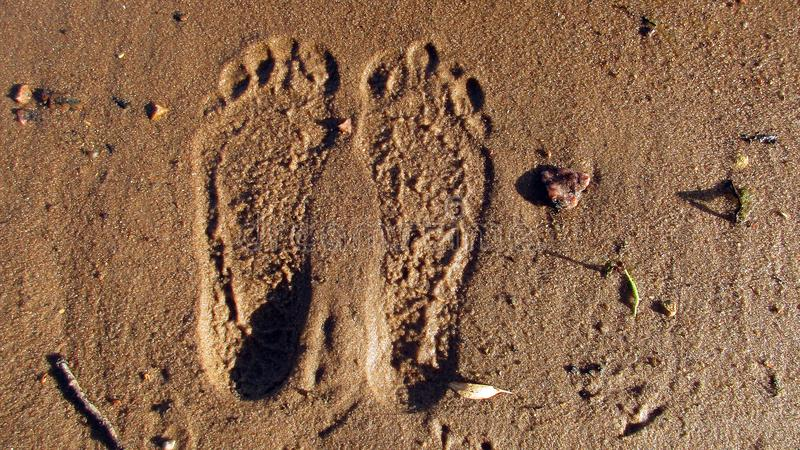 Deep footprints in the wet sand from bare human feet among sticks, stones and fallen yellow small leaves from the trees. The photo shows the human footprints of royalty free stock images