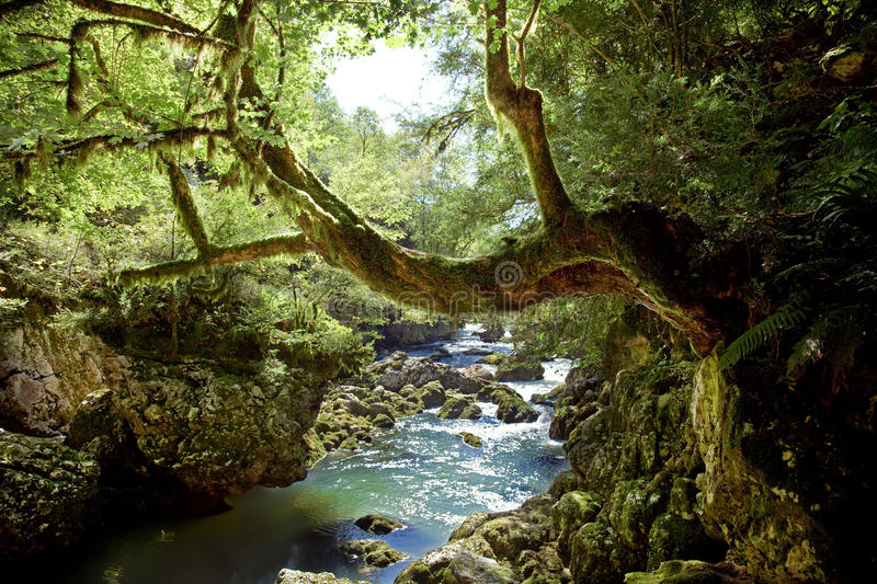 Download Deep forest stock photo. Image of color, river, purified - 11221128