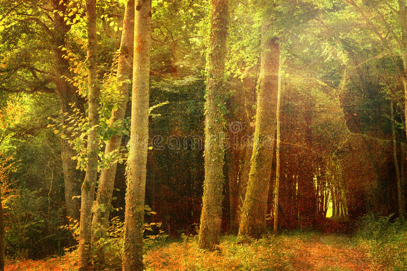 Download Deep forest stock photo. Image of morning, artwork, retro - 3190888