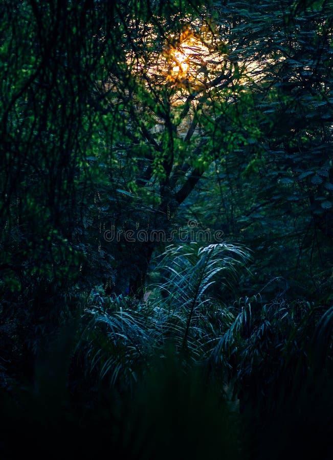 Deep Forest Free Public Domain Cc0 Image