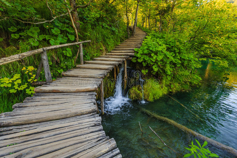 Deep forest with clear water.Plitvice,Croatia stock images