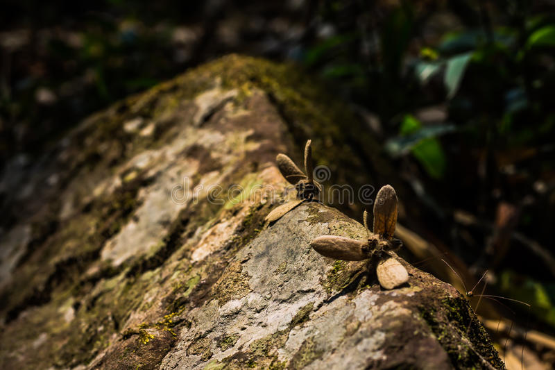 Deep forest creatures royalty free stock images