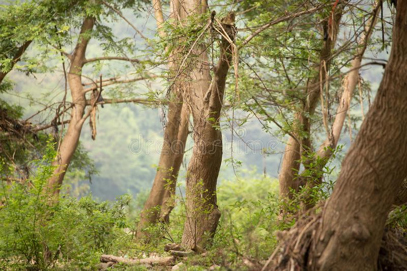 Forest. Deep forest in mid-summer stock image