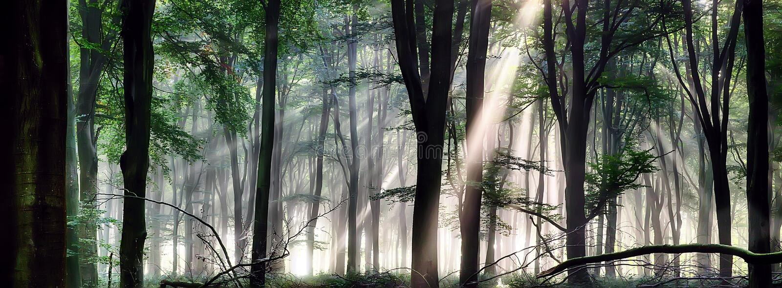 Deep forest morning light royalty free stock photography