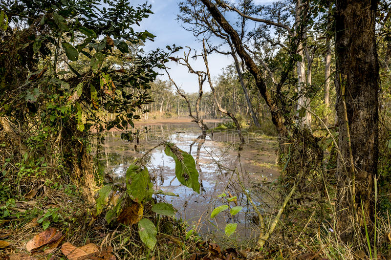 Download Deep Forest In Nepal Jungle (Chitwan). Royalty Free Stock Photo - Image: 24106615