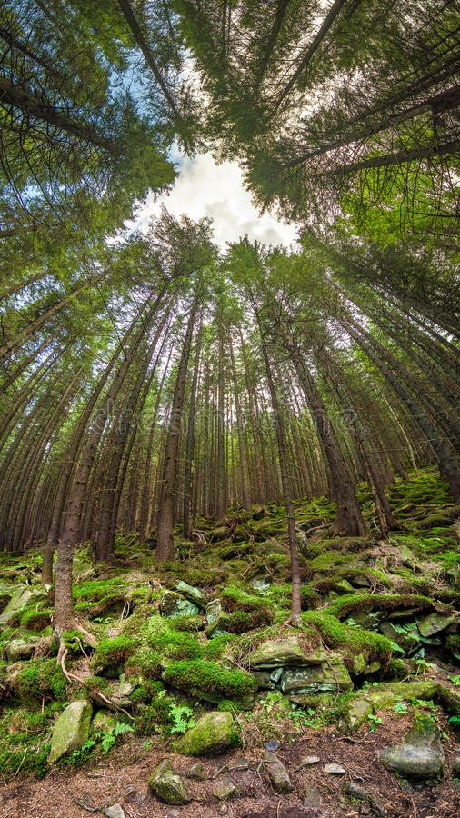Deep forest overhead view whith unusual angle royalty free stock image