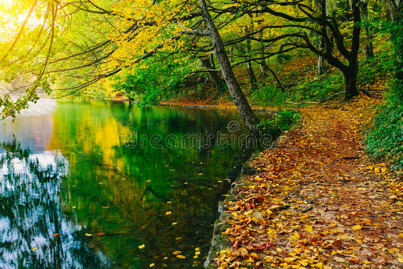Deep forest pathway in the sunshine near the lake.Plitvice lakes,Croatia stock photo
