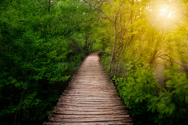 Deep forest pathway in the sunshine. Plitvice lakes, Croatia stock photography