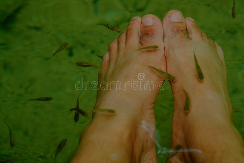 In deep forest and pond with fish spa pedicure wellness skin car stock photo