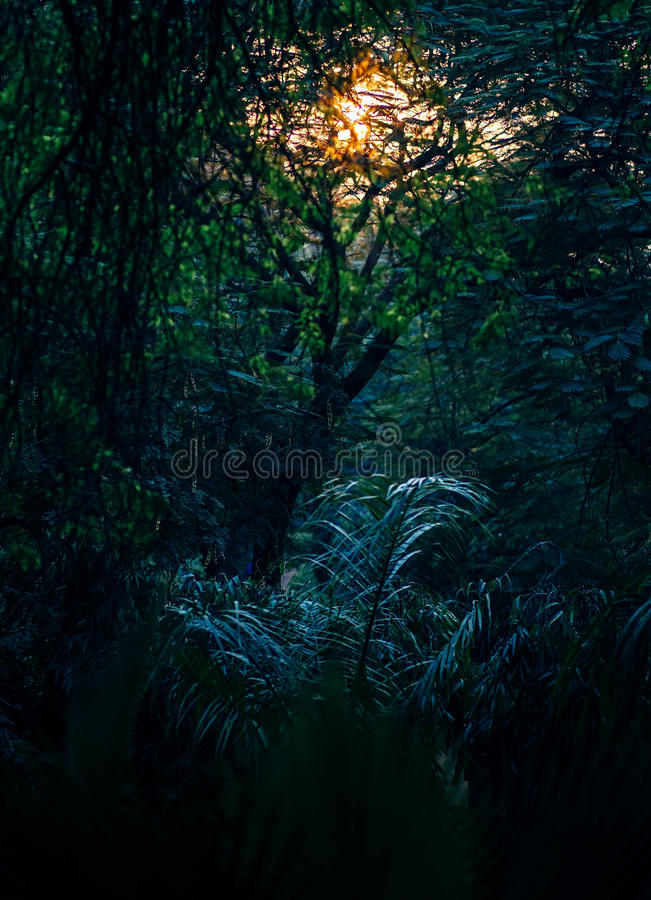 Deep forest royalty free stock photography