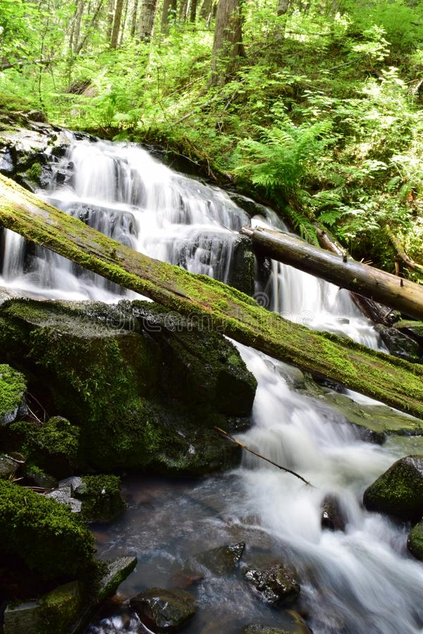 Deep forest waterfall. Taken with a long exposure stock photography