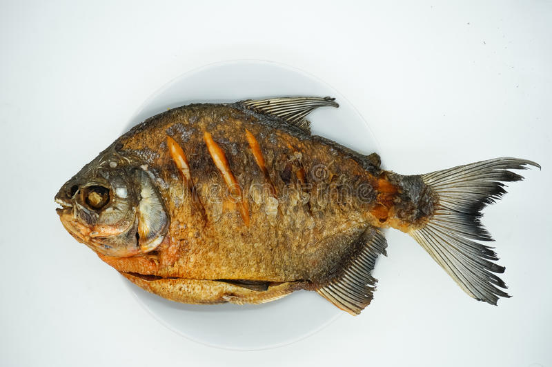 Deep fried pomfret royalty free stock photos