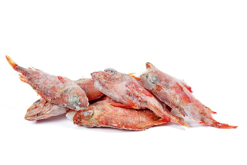 Deep frozen raw red perch fishes stock image