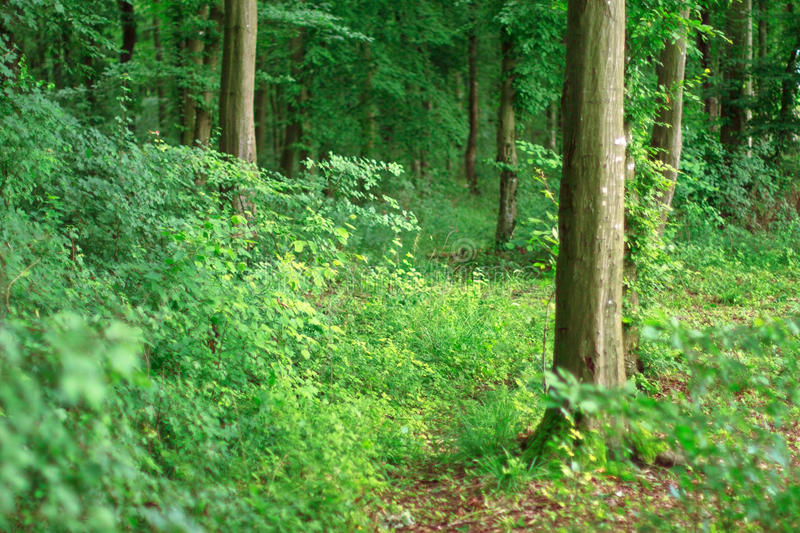 Deep Green Forest Stock Photography
