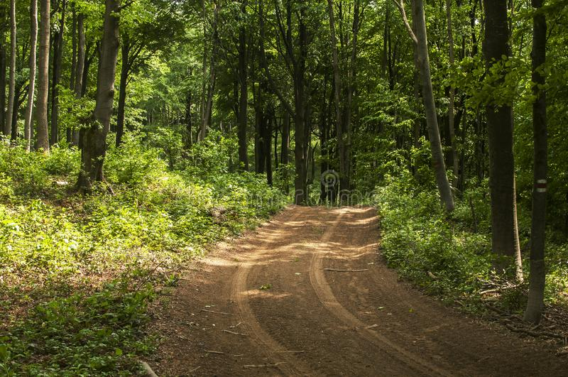 Deep green forest road. Through the woods landscape royalty free stock photography
