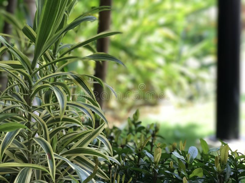 Deep green grass. Beauty trees royalty free stock images