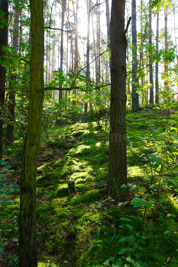 Free Deep Green Trees In Forest Stock Image - 6818371