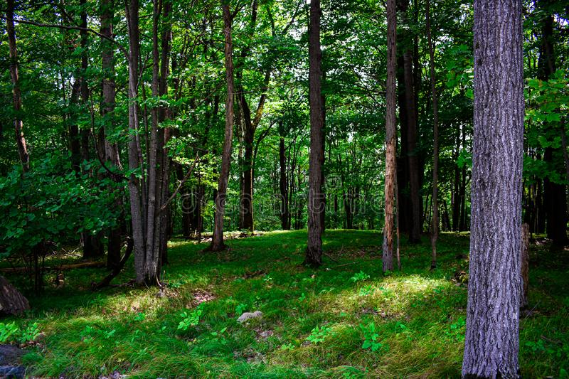 Green Forest with Sun Shining Through the Trees royalty free stock photos