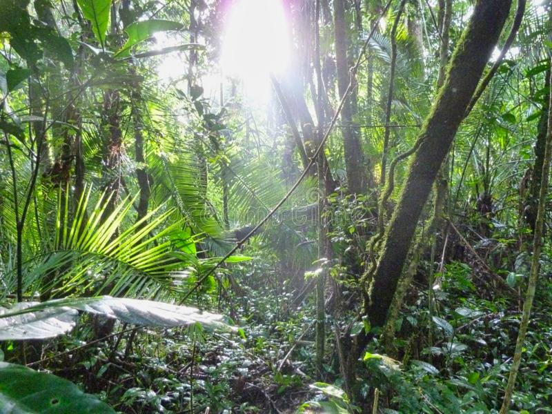 deep jungle with sunbeams on the ground royalty free stock images