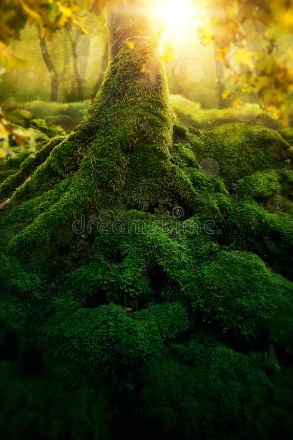 Deep magic forest royalty free stock photo