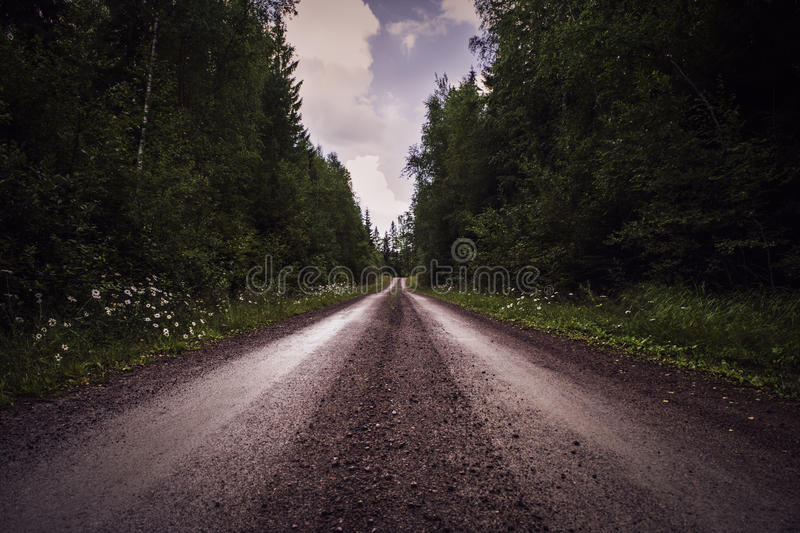 Deep perspective of gravel road through forest. Vanishing point perspective of a rocky dirt road through a deep forest. Dark, mysterious feeling royalty free stock photos