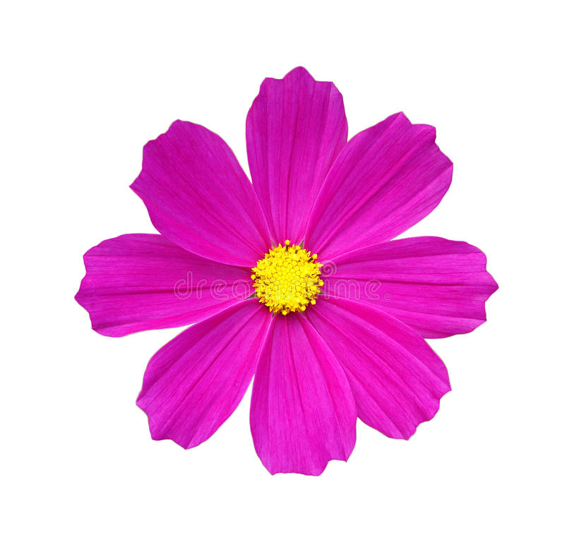 Deep Pink Flower Stock Photography