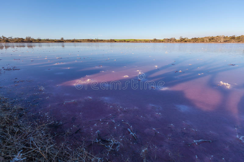 Deep purple pink surface of a salt Lake Hardy, Murray-Sunset Nat royalty free stock images