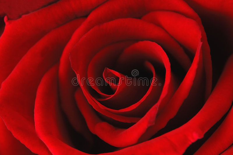 Deep red rose - abstract royalty free stock photography